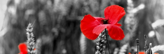 Commemorating World War One centenary: Chiltern and South Bucks District Councils small grants scheme