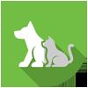 Animal Activity Licensing